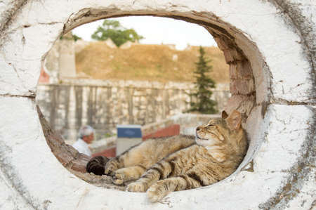window opening: Cute kitty sleeping in a rounded window opening