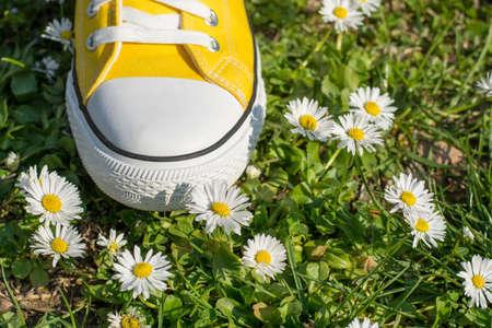 dasiy: Yellow sneakers i a dasiy field.