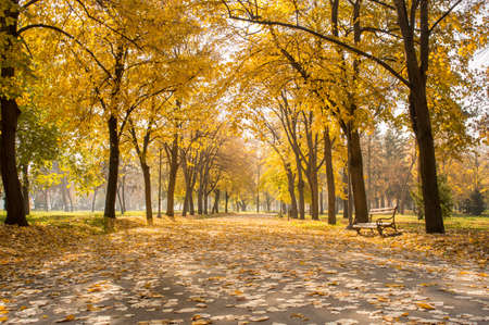 park path: Autumn fairy tale. Park path covered in fallen leaves