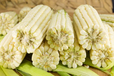 picked: Freshly picked corn cobs in a row Stock Photo
