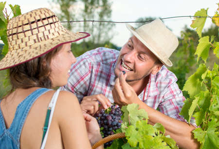 wine grower: Happy couple eating grapes in a vineyard
