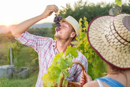 young farmer: Young farmer enjoying fresh grapes at vineyard Stock Photo