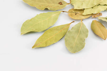 Green bay leaves on white wooden table Stock Photo