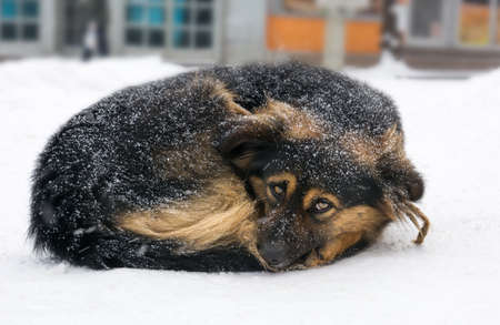 Lonely mix breed dog freezing on the street while snowing