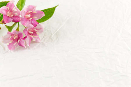 Weigela pink flowers in blossom on white fabric