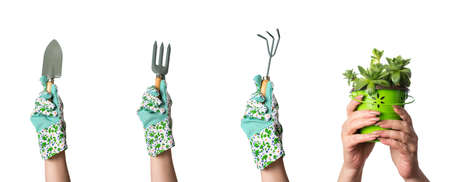 spading fork: Hands holding gardening tools and houseleek plant