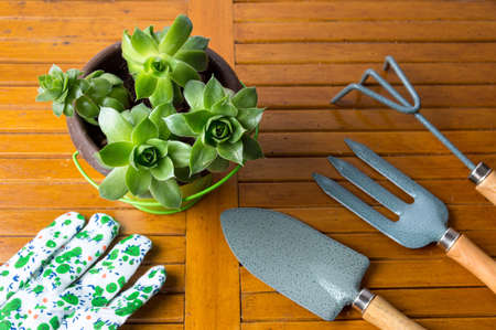 Gardening tools and potted houseleek plant on a table