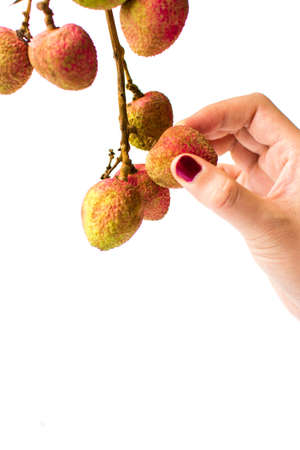 Female hand picking lychee fruit from a branch Stock Photo