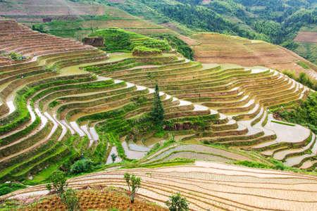 watered: Terraced rice field in Longji, Guilin area, Guangxi China