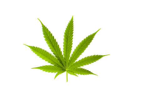 Marijuana leaf isolated on a white background Stock Photo