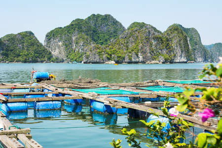 human settlement: Fisherman village and fishpond near Cat ba island in Vietnam