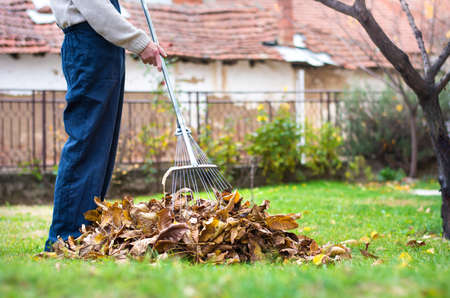 Man cleaning fallen autumn leaves in the backyard