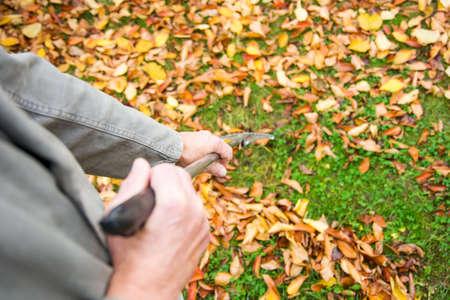 Homme, nettoyage, déchu, automne, feuilles, arrière-cour Banque d'images