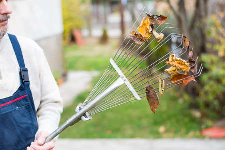 Man holding rake with fallen autumn leaves in the yard Stock Photo