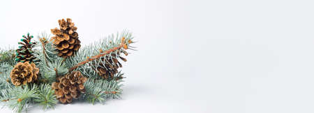 Pine cones on a branch isolated. Festive background