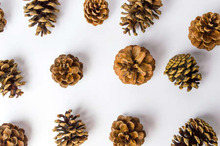 Bunch of pine cones on white flat lay. Festive background