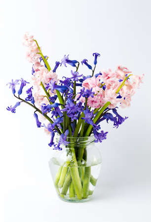 Colorful hyacinth flowers in a glass vase on white
