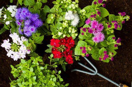 Fresh flowers and gardening tools in the soil Stock Photo