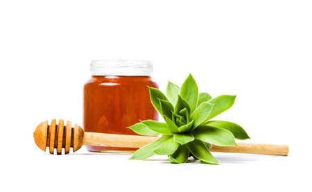 Jar of honey with houseleek plant isolated
