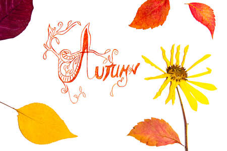 Autumn card with fallen leafs , fall background