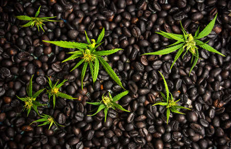 Coffee beans with marijuana leaves background top view Reklamní fotografie