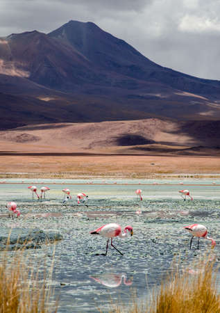 Blue lake with Flamingos in Bolivia Salt Flats 免版税图像