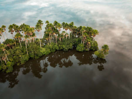 aerial of palm trees and clouds reflecting in a lake