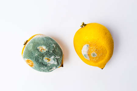 Moldy lemon fruit on white background top view Stock Photo