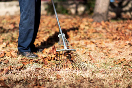 Man collecting fallen autumn leaves in the backyard 스톡 콘텐츠