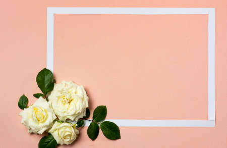 White roses arrangement on pastel background with copy space
