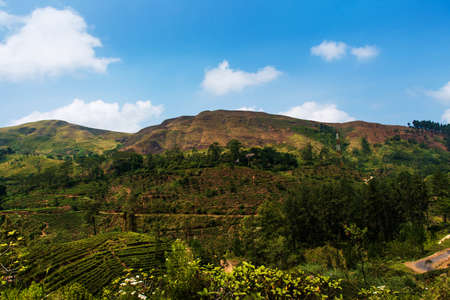 Scenic tea plantations landscape in Sri Lanka highlands from the train window