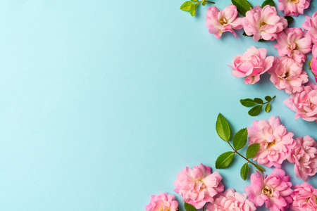 Pink flowers on blue background spring arrangement with copy space Stockfoto