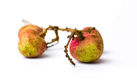 Lychee tropical fruit on white background isolated