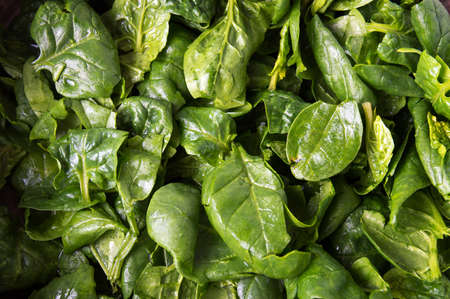 Fresh spinach leaves close up making background