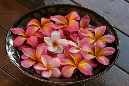 Nähe von bis rosa und gelbe Plumeria / frangipani Blumen in Schale  Standard-Bild - 959667