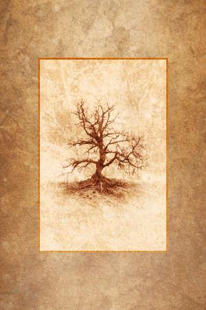 arboles secos: Lonely Tree Winter