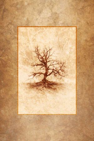 dead trees: Lonely Winter Tree