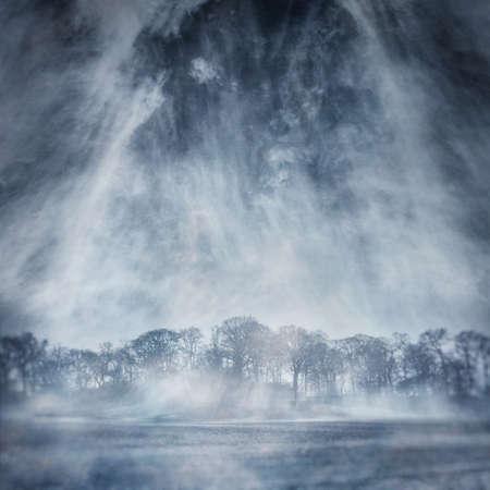 wintriness: Winter Trees
