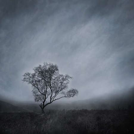Lone Tree in a Misty Landscape