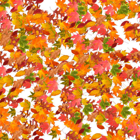 Composition of fall leaves, colorful autum leaf on white isolated background. photo