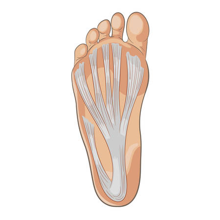 footwear: Foot sole illustration. Colored vector isolated on white.