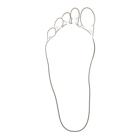 Foot sole contour illustration for biomechanics, footwear, shoe concepts, medical, health, massage, spa, acupuncture centers etc. Realistic cartoon style contour. Vector isolated on white.