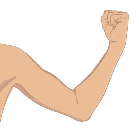 女性の上腕二頭筋、よくトーンします。肘曲げ腕フィットネス後の進行状況を示します。ベクターのイラスト、色、現実的なスタイル。女性スポー