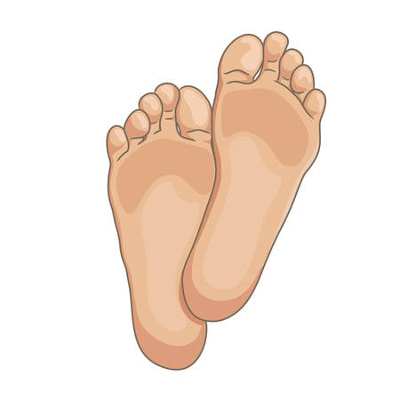 Female or male foot soles, barefoot, bottom view. Vector illustration, hand drawn cartoon style isolated on white.