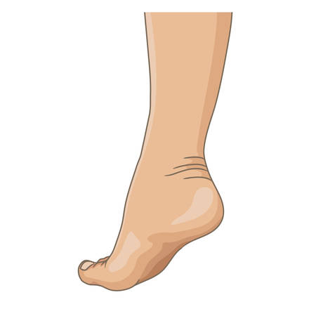 Female legs barefoot, side view. Vector illustration, hand drawn cartoon style isolated on white. 矢量图像