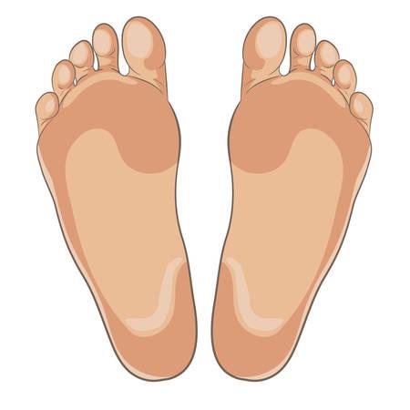 Illustration der linken und rechten Fußsohlen für Schuhe, Schuhkonzepte, Medizin, Gesundheit, Massage, Spa, Akupunkturzentren usw. Realistischer Cartoon-Stil, mit Hauttönen gefärbt. Vektor lokalisiert auf Weiß.