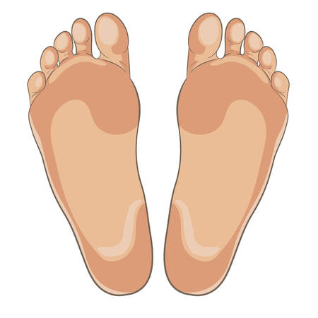 Left and right foot soles illustration for footwear, shoe concepts, medical, health, massage, spa, acupuncture centers etc. Realistic cartoon style, colored with skin tones. Vector isolated on white. 写真素材 - 102127999