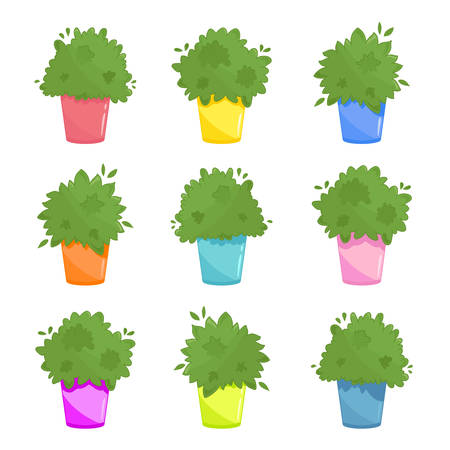 Set of green inhouse plants in different coloured pots. Urban kitchen windowsill garden illustration. Lush green culinary herbs collection in cartoon style. Vector isolated on white Ilustração