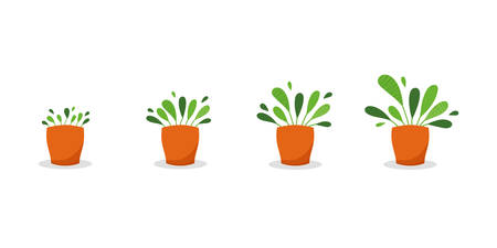Potted plant growth stages. Home plant steadily grow in pot. From little sprout to lush foliage. Vector illustration, cartoon flat style Ilustração