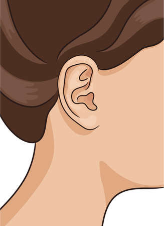 Vector illustration of human ear closeup with part of head and hair. Realistic style. Illustration